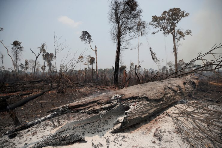Charred trunks are seen on a tract of Amazon jungle, that was recently burned by loggers and farmers, in Porto Velho, Brazil August 23, 2019. REUTERS