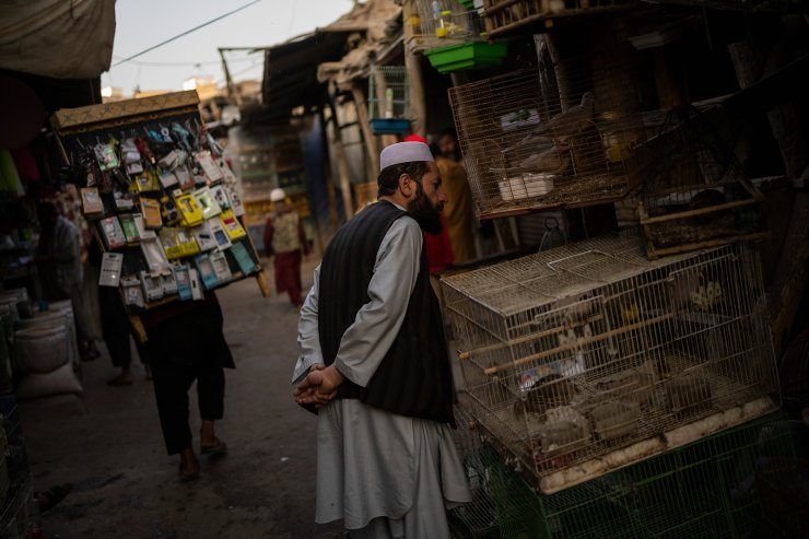 An Afghan man checks birds at a market in Kabul's Old City, Afghanistan, Tuesday, Sept. 14, 2021. AP