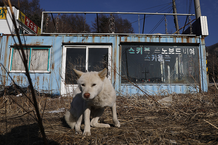 The lodging buildings and the main arcade of Alps Ski Resort sit in a wasteland, which used to be one of the slopes of the resort, located in Goseong County, Gangwon Province, on Feb. 7.  Korea Times photos by Choi Won-suk