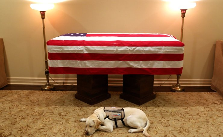Sully, the service dog of former U.S. President George H.W. Bush in his final months, lays in front of Bush's casket at the George H. Lewis & Sons funeral home in Houston, Texas, U.S., December 3, 2018. AP