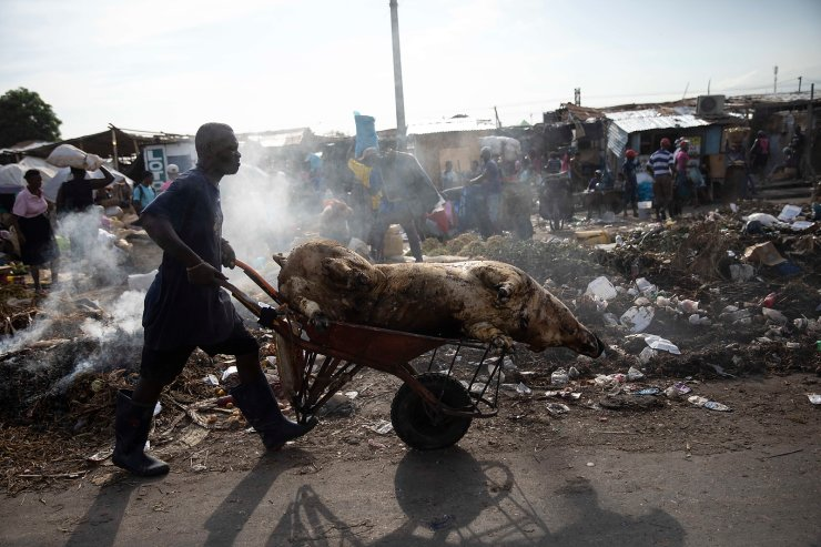 A man pushes a wheelbarrow carrying the carcass of a pig through a street market in downtown Port-au-Prince, Haiti, Wednesday, Sept. 22, 2021. AP