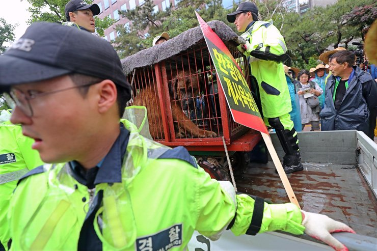 Police prevent dog farm owners from taking dogs out of cages during a protest calling for the government to legalize the dog meat trade near the National Assembly in Seoul, Wednesday. / Yonhap