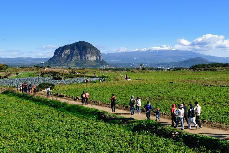 Walkers on the 11th trail of 'Jeju Olle' can see large fields in front of them, Mt. Sambang in the middle, and snow-capped Mt. Halla as a background. / Courtesy of Jeju Olle