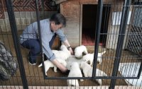 President Moon Jae-in's dog gifted from Kim Jong-un delivers 7 puppies