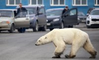 'Nowhere to run': UN report says global warming nears limits