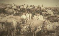 Rinderpest: Cattle plague of Joseon a human killer?