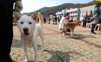 Court upholds man's jail term for slaughter, eating of two Jindo dogs