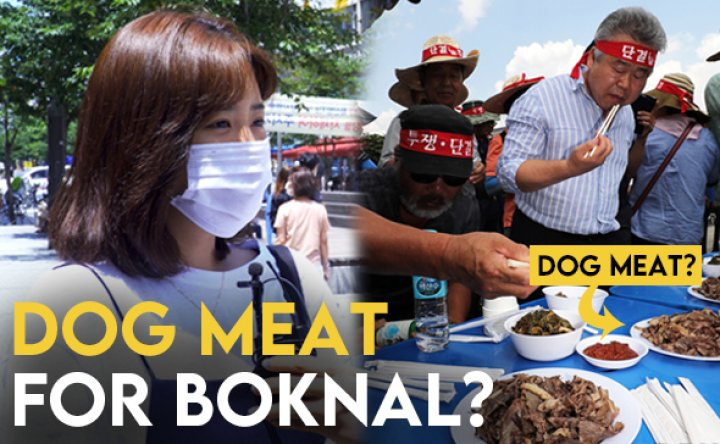 'Respect our culture': Koreans talk about eating dog meat on Boknal in Korea [VIDEO]