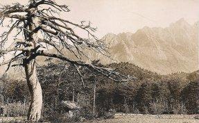 Korea's ancient trees