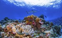 Researchers complete first-ever detailed map of global coral
