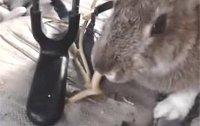 뱀을 잡아먹는 토끼 영상 화제