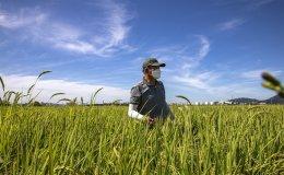 Farmer of Seoul's last remaining rice growing region in upbeat mood