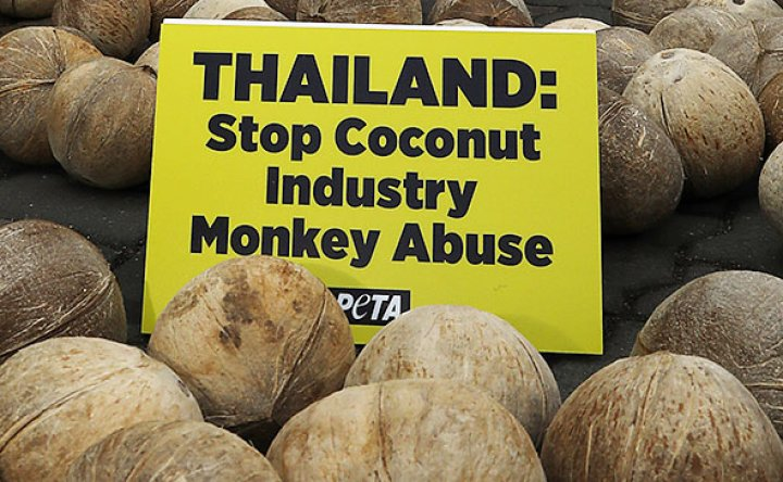Animal rights activists dump coconuts in front of Thai embassy, criticizing forced monkey labor