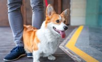 Owners of unregistered dogs to face fines from October