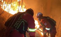 Forest fire in Jeongseon contained; no casualties reported