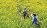Jeju Olle Route 7 among hikers' most popular courses