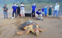 Six endangered sea turtles return to the sea