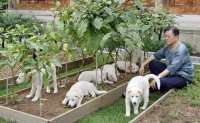 President seeks to rehome puppies born to dog from North Korea