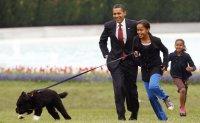 Obama dog Bo, once a White House celebrity, dies