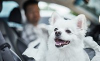 Pet ownership survey: People call for heavier punishment for animal abusers