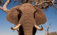 Spanish zoo worker killed by elephant
