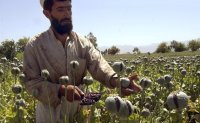 China, the Taliban and the threats from the illegal drug trade