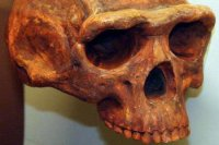 1.7 mil.-year-old extinct human species fossil found in China