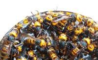 Gov't warns on wasp-based soju