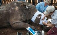 China eases ban on trade of rhino and tiger parts