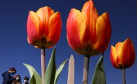 Enjoying spring while social distancing [PHOTOS]