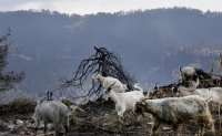 Greece facing 'ecological disaster' from raging wildfires