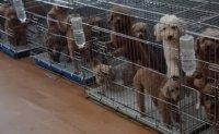 Pet grooming academies accused of animal abuse