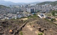 Korea's 300 million tree harvest plan to reduce carbon emission irks activists