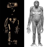 Ardi fossil, 4.4 million years old, found to be linked to humans