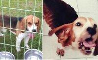 Ex-SNU dog breeder gets suspended sentence for fatal abuse of cloned dog
