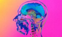 Men and women do not have different brains, claims neuroscientist