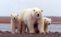 Biden administration halts oil drilling in Alaska wildlife refuge