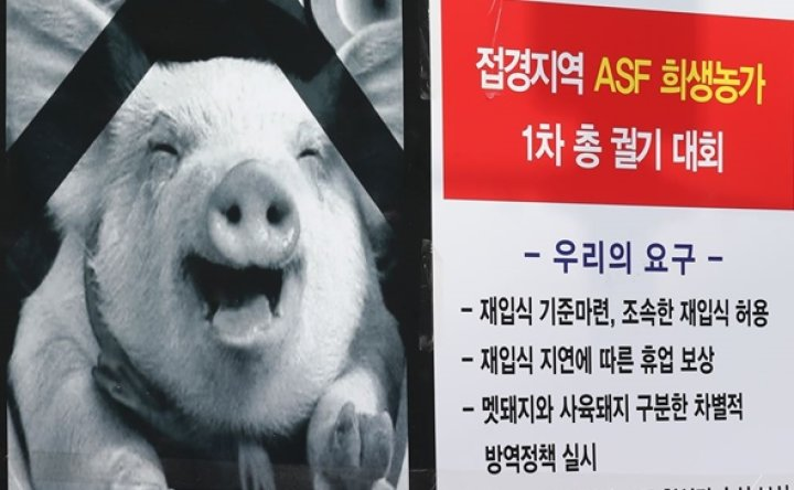 Number of African swine fever-positive wild boars in Korea reaches 105