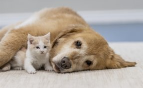 Imports of cats, dogs double in 2 years amid pandemic: data