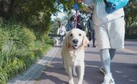Pets join the 486th Turtle Marathon as running buddies