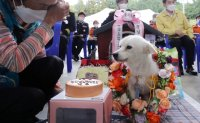 Once abandoned, Baekgu becomes first honorary rescue dog after saving missing woman